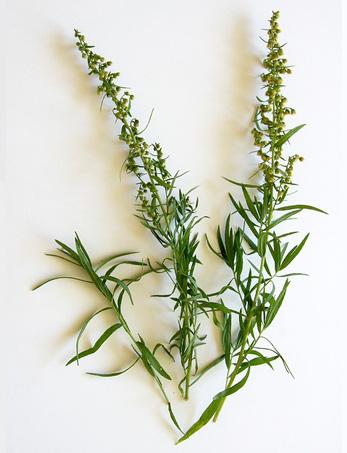 L'erba dell'oblio